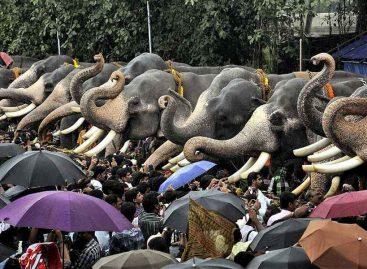 Правила движения слонов