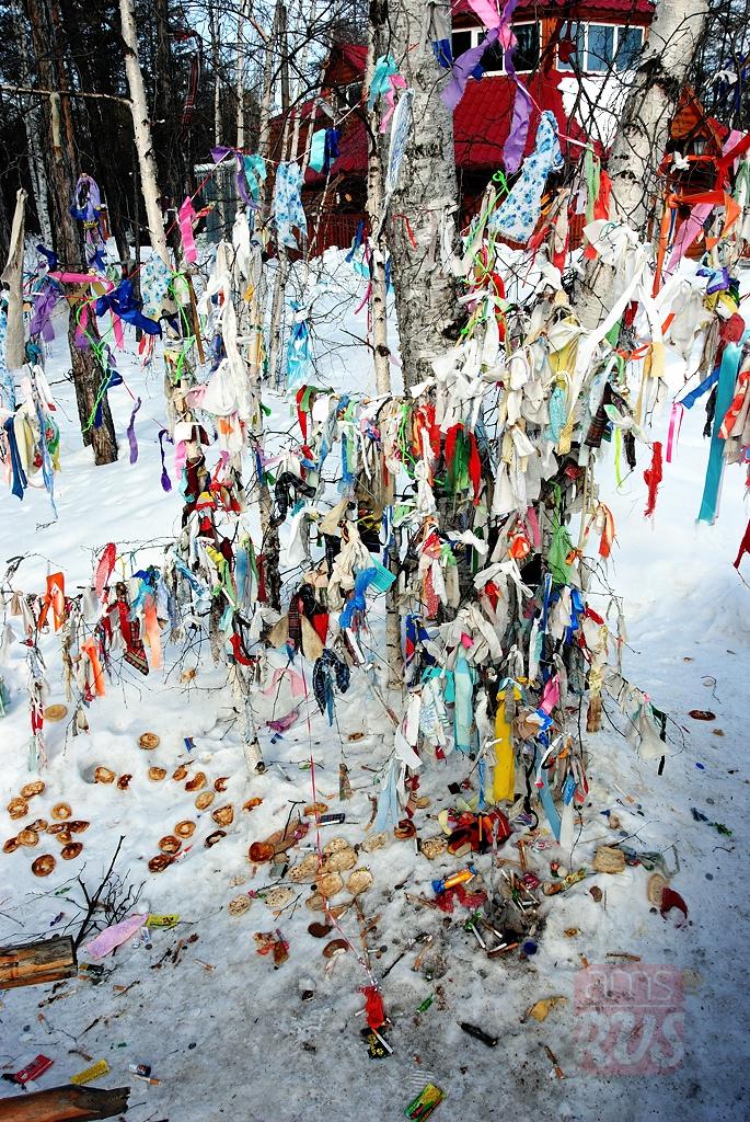 Остановиться у шаман-дерева и поднести местному богу Байанаю подарок