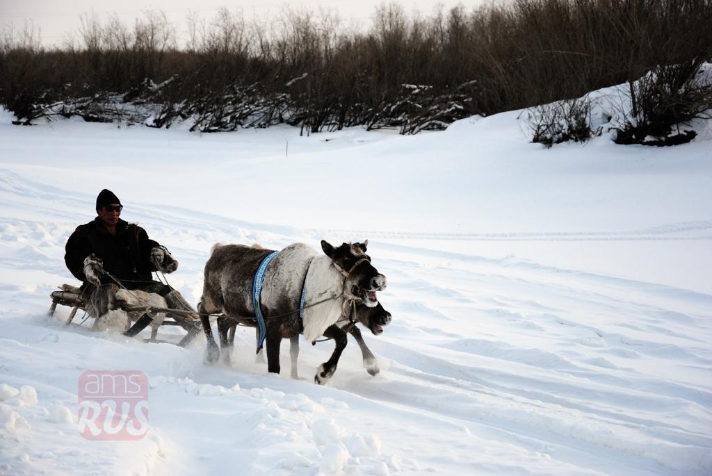 крестьянская лошадка
