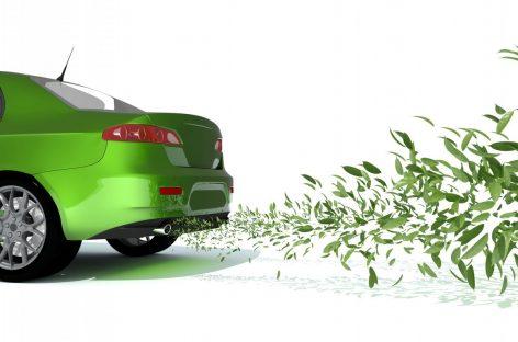 Зеленые в плюсе, здравый смысл в минусе