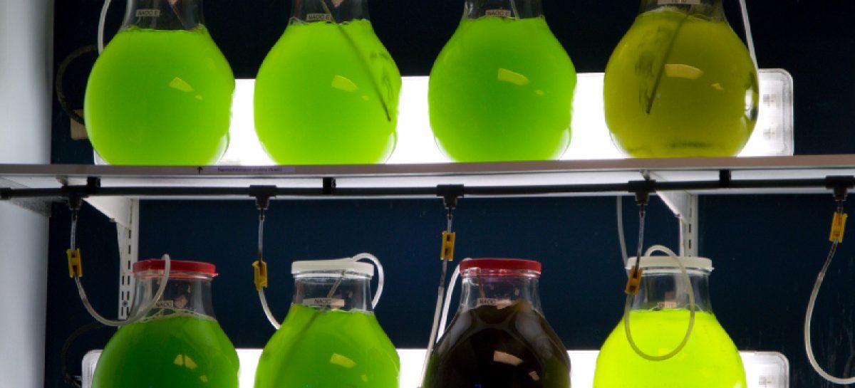 Автобус на биотопливе из морских водорослей