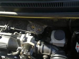 Кошка под капотом автомобиля