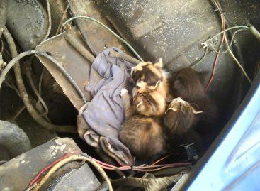 В АвтоВАЗ поступила просьба сделать конструкцию Lada Kalina кошкозащитной