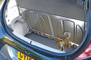 Белка в багажнике