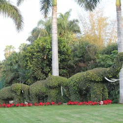 Знаменитый Loro Parque на Тенерифе