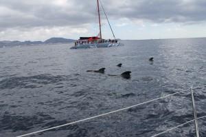 Прогулка на яхте к месту дрейфа канарских китов-пилотов