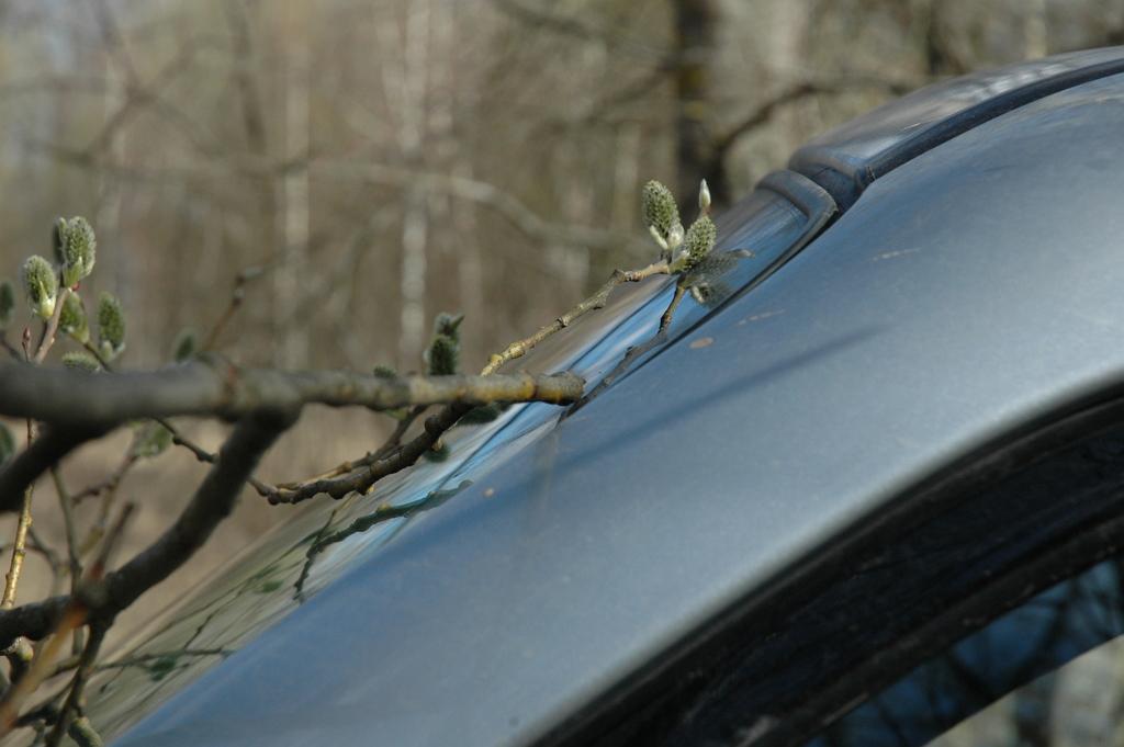 Ветки царапают машину
