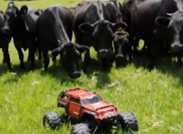 Это пастух или все же игрушка?