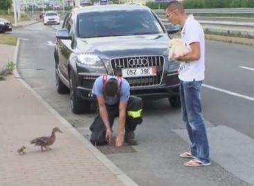 Утята и полиция Словакии