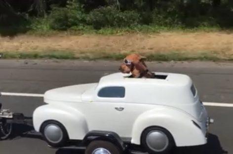 Собака едет в отпуск