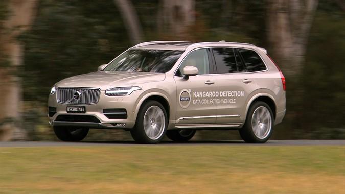Volvo Cars разрабатывает систему предупреждения столкновений с кенгуру