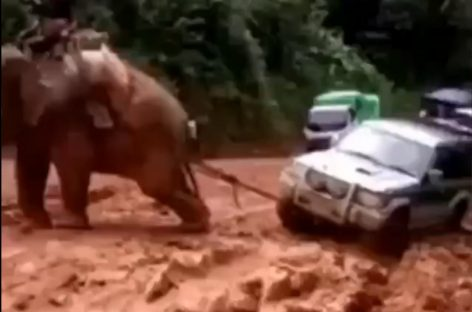 Вместо трактора