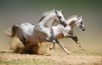 Какова средняя скорость лошади?