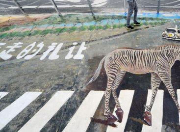Зебра на зебре