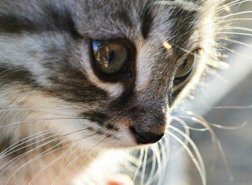 Спасется ли котенок?