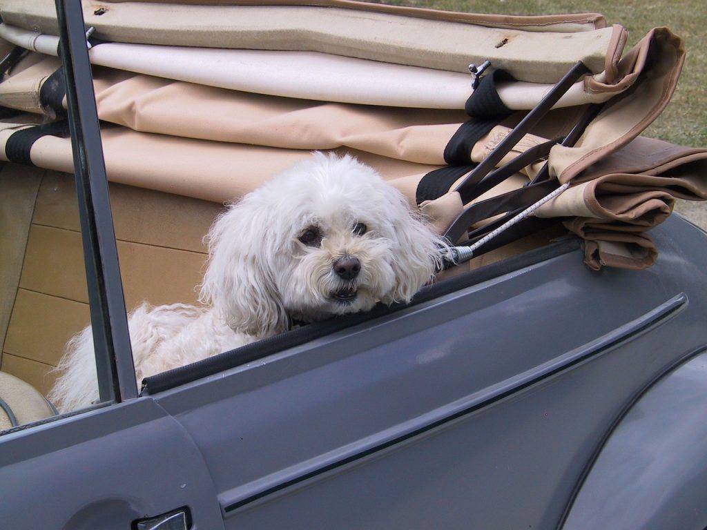 собака авто