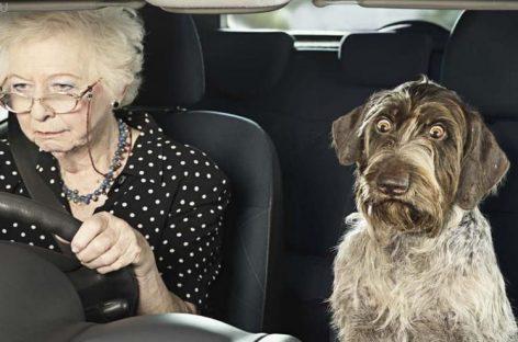 В Москве могут появиться знаки на автомобили для водителей старше 75 лет