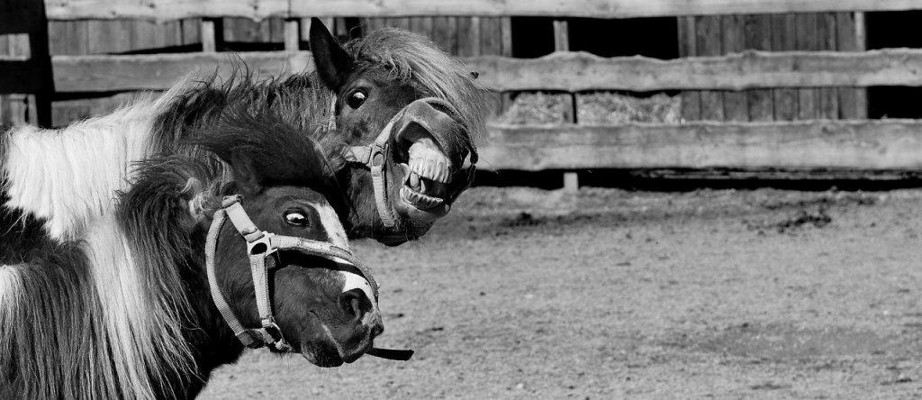 horse-1790117_1280