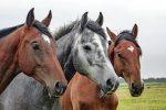 Сбежавший в Череповце конь повредил санями восемь автомобилей