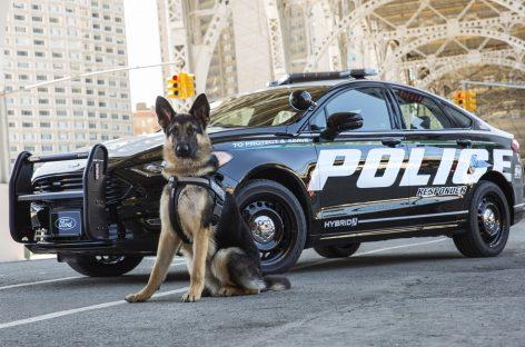 Эволюция полицейских машин: от V8 до гибрида