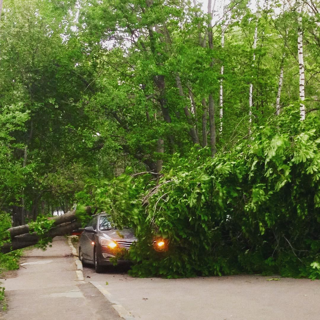 Ураган в Москве 2017 дерево упало на автомобиль