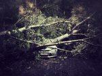 Подсчитан ущерб причиненный автомобилистам ураганом
