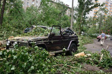 Что делать, если на автомобиль упало дерево?
