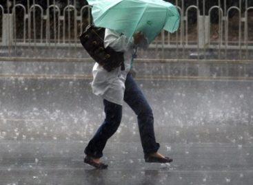 Из-за дождливой и ветреной погоды москвичам рекомендовали не оставлять машины у деревьев