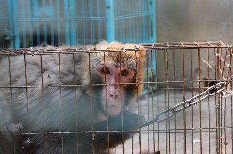 Volkswagen ставила жестокие опыты над животными