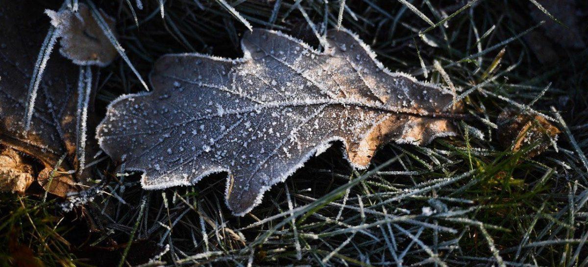 В столичном регионе ожидается понижение температуры до 0 градусов