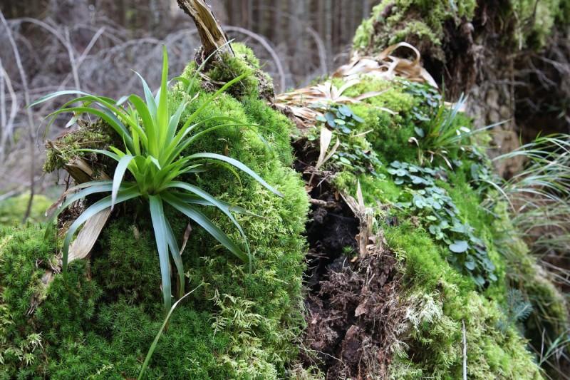 В Закарпатье богатые леса