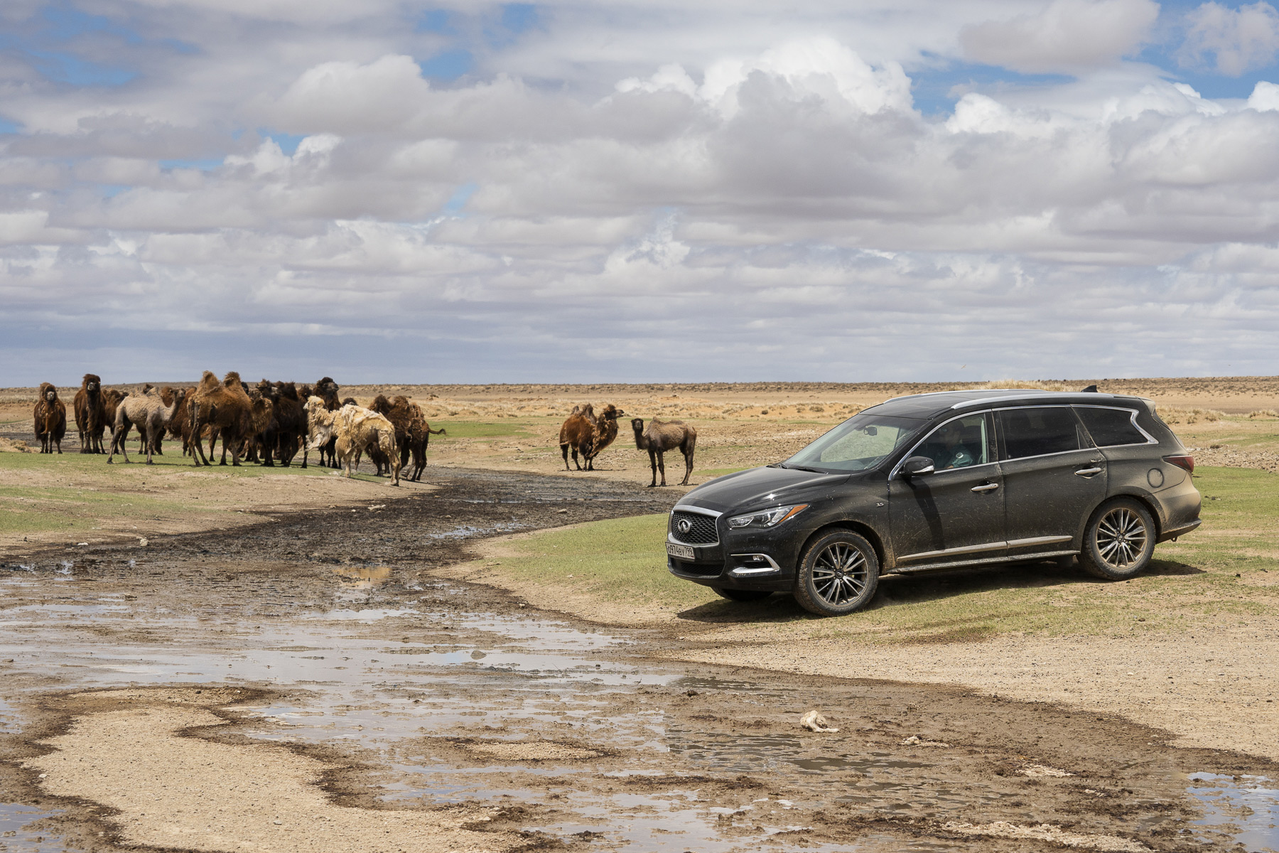 INFINITI совместно с Монгольским институтом палеонтологии и геологии объявляют о значительном успехе совместной экспедиции в пустыню Гоби