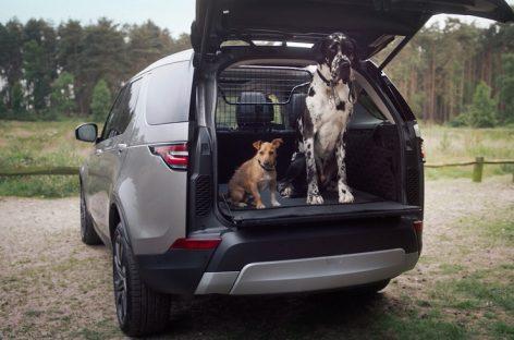 Собаки, кошки и Landrover