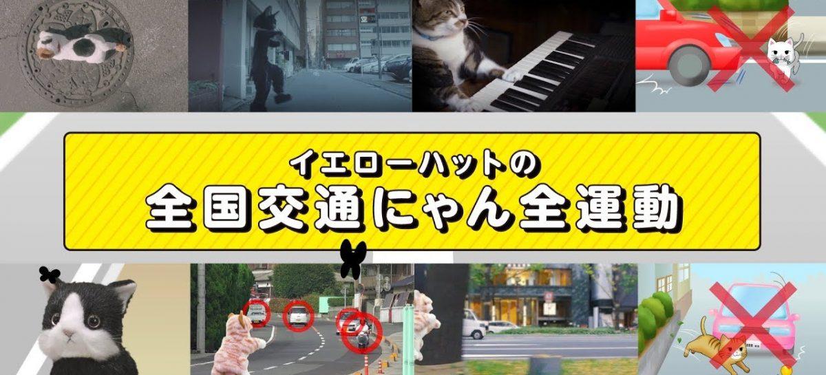 Японцы решили научить кошек правильно вести себя на дороге и сняли им обучающее видео