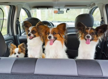 Как безопасно перевозить животных в автомобиле: 10 важных правил