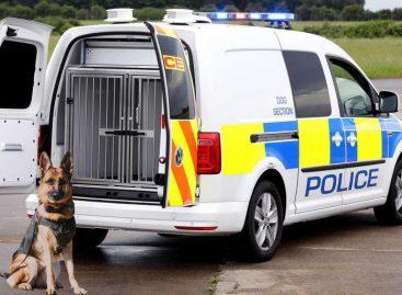 Volkswagen продемонстрировал новый фургон для полицейских собак
