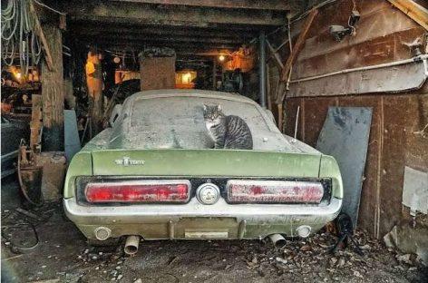 Брошенный Ford Mustang GT500 1967 удивил даже экспертов Shelby