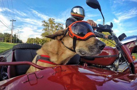 Потому что не Harley: мотоциклы «Урал» в Америке