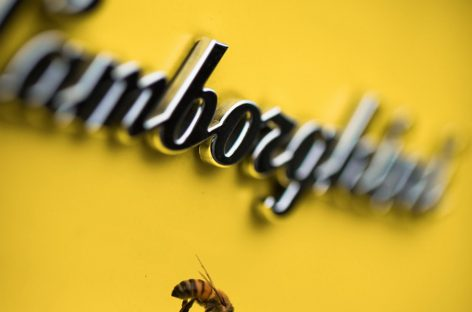 Lamborghini проводит экологический биомониторинг с помощью пчел